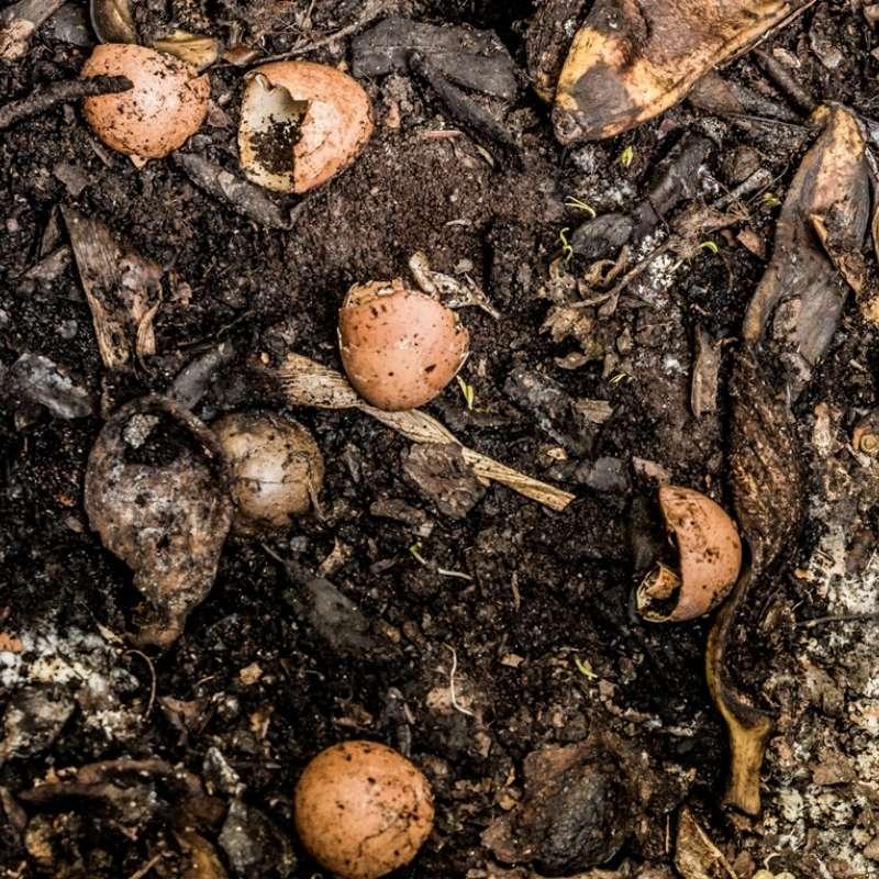 Food Scraps Compost